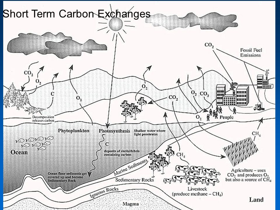 Short Term Carbon Exchanges