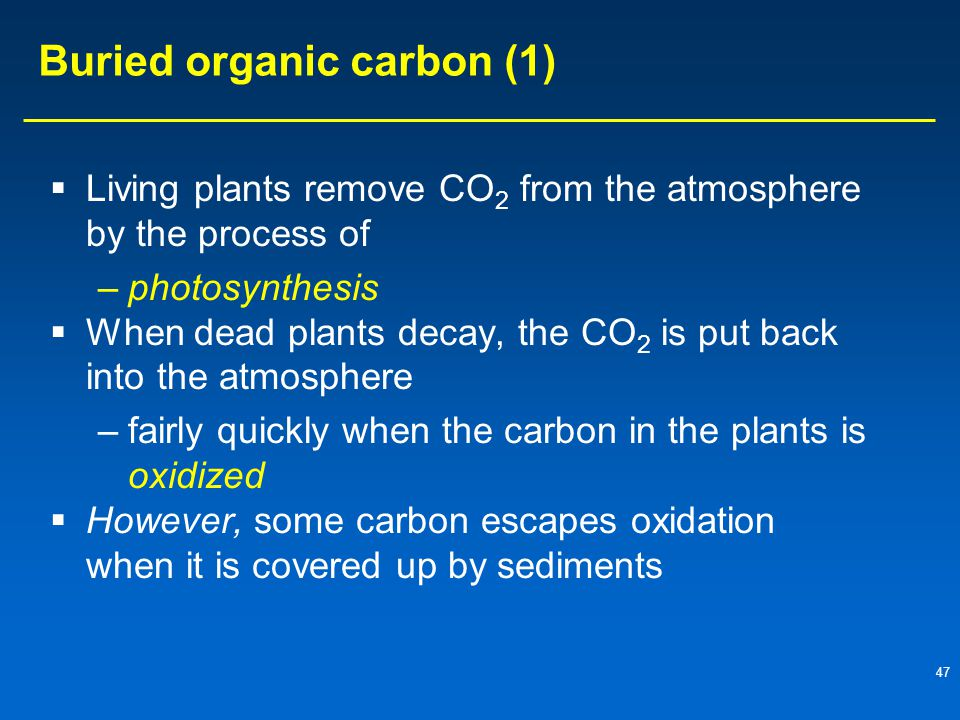 Buried organic carbon (1)