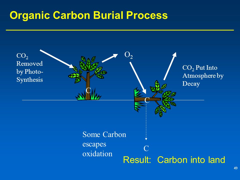 Organic Carbon Burial Process