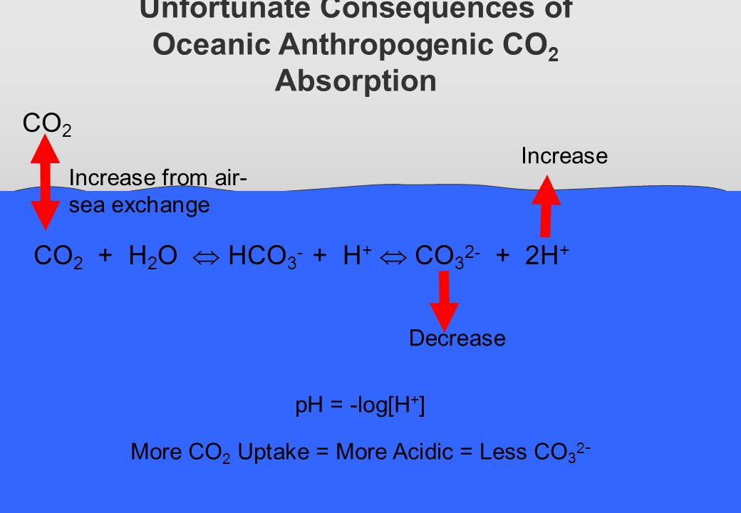 Unfortunate Consequences of Oceanic Anthropogenic CO2 Absorption
