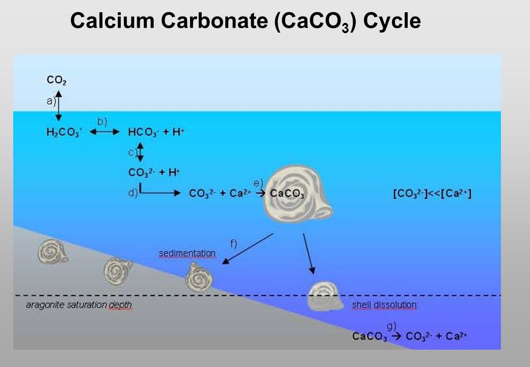Calcium Carbonate (CaCO3) Cycle