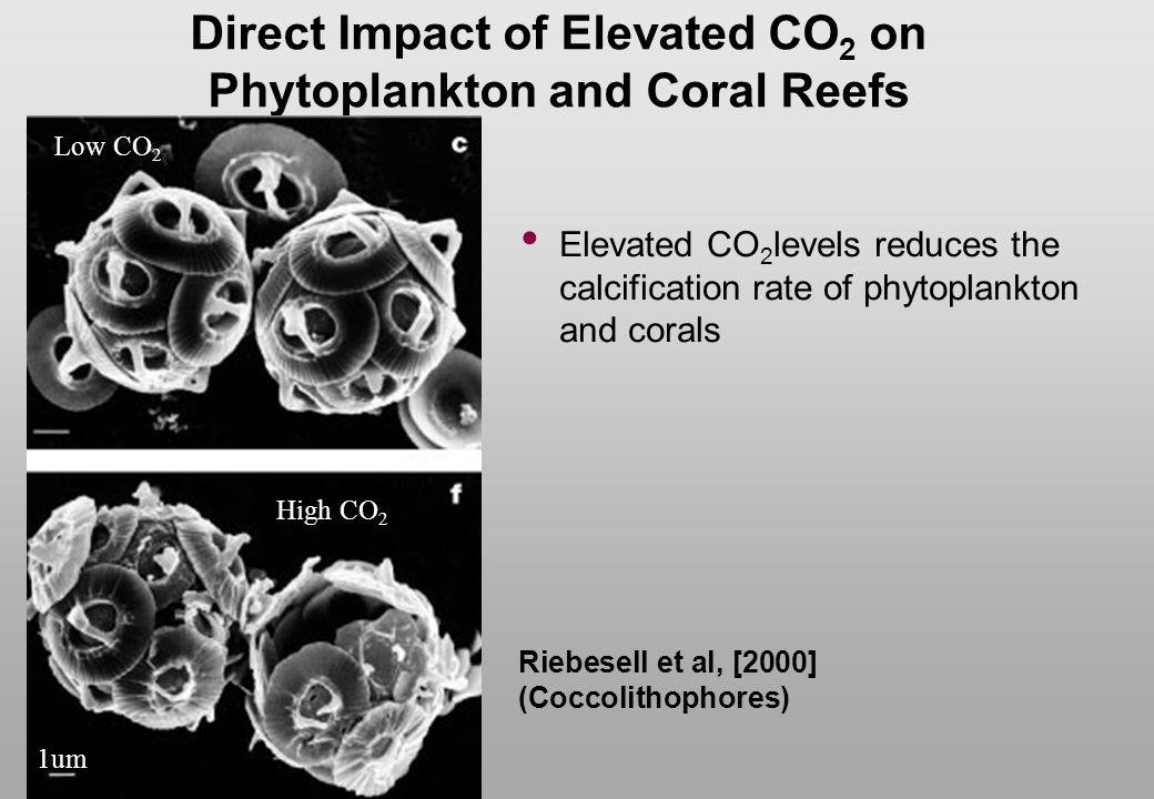 Direct Impact of Elevated CO2 on Phytoplankton and Coral Reefs