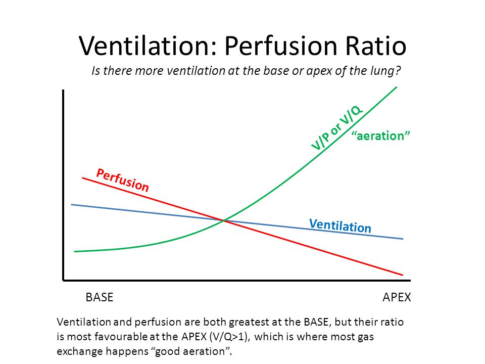 Ventilation: Perfusion Ratio