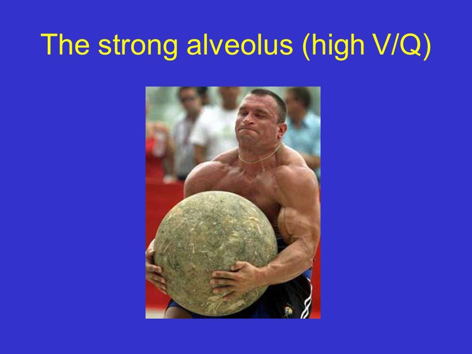 The strong alveolus (high V/Q)