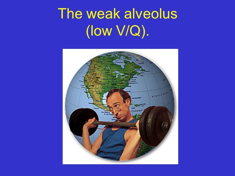 The weak alveolus (low V/Q).