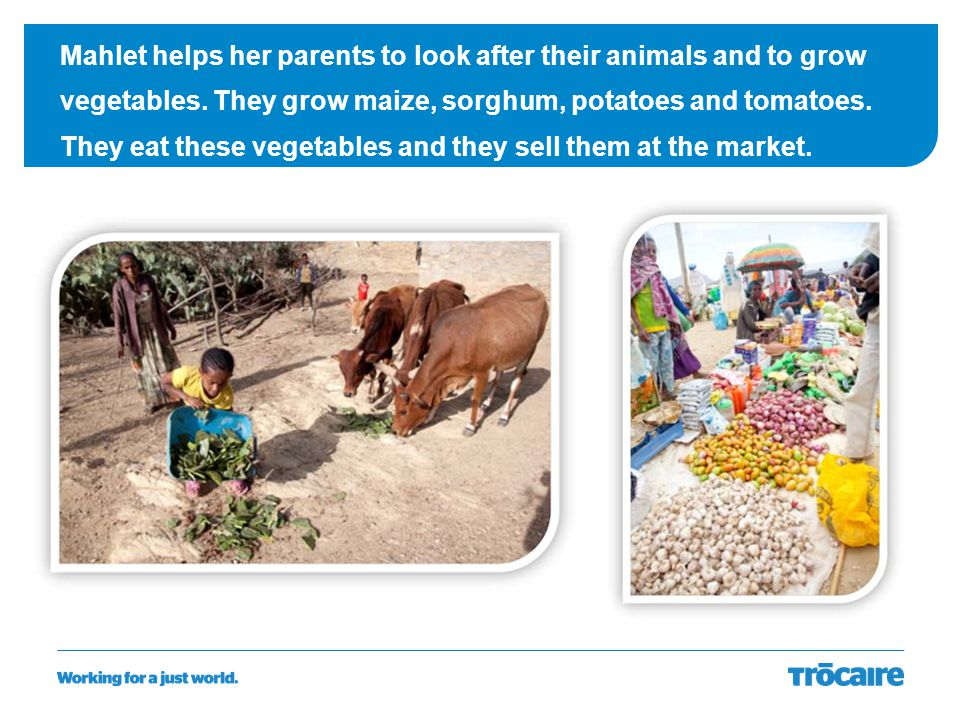 Mahlet helps her parents to look after their animals and to grow vegetables.