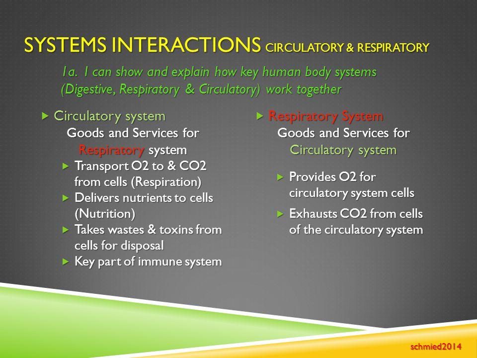 Systems Interactions Circulatory & Respiratory