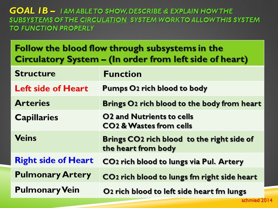 Goal 1B – I am able to show, describe & explain how the subsystems of the Circulation system work to allow this system to function properly