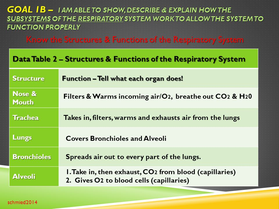 Goal 1B – I am able to show, describe & explain how the subsystems of the Respiratory system work to allow the system to function properly