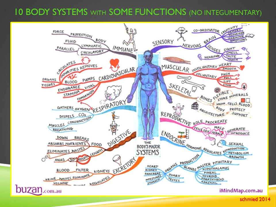 10 Body Systems with some functions (no integumentary)