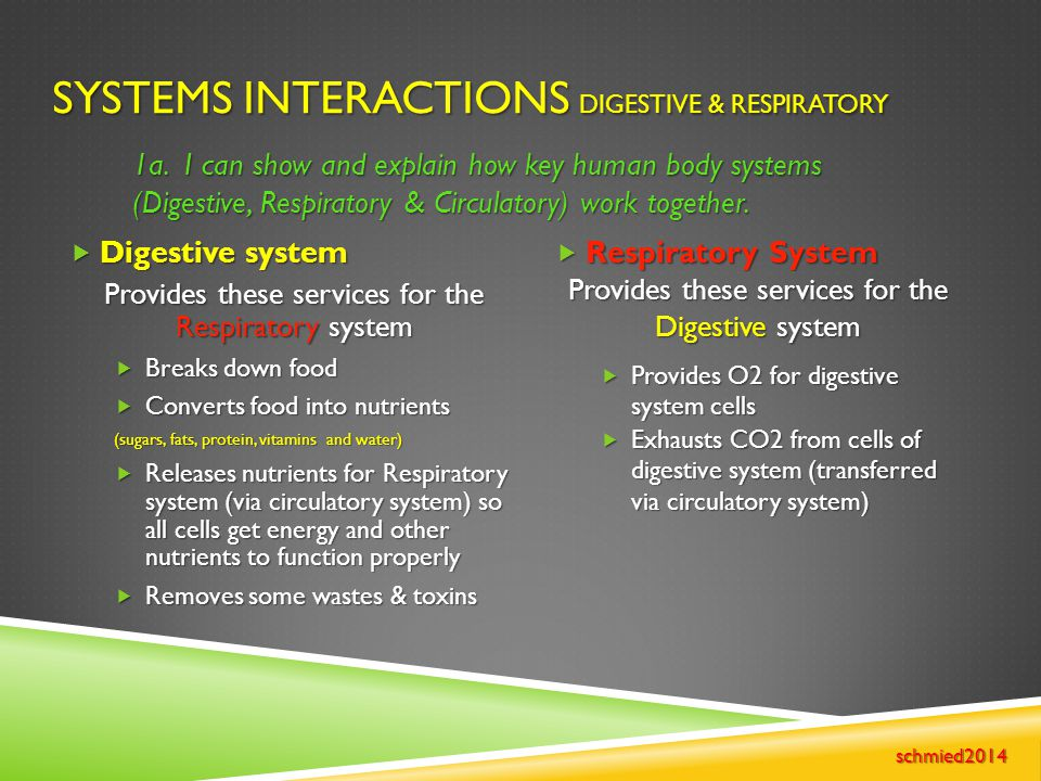 Systems Interactions Digestive & Respiratory