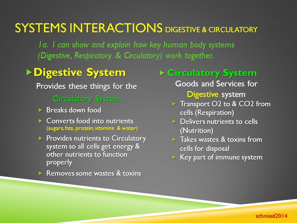 Systems Interactions Digestive & Circulatory