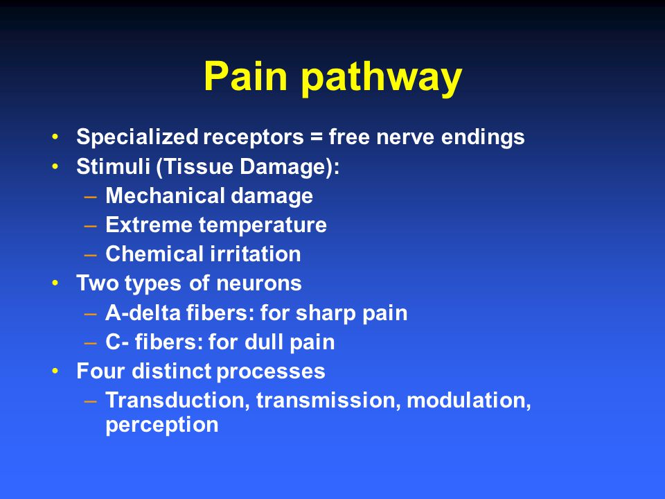 Pain pathway Specialized receptors = free nerve endings