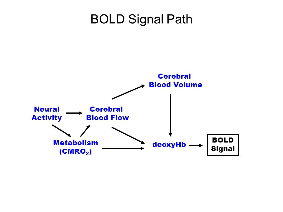 BOLD Signal Path Cerebral Blood Volume deoxyHb Neural Activity