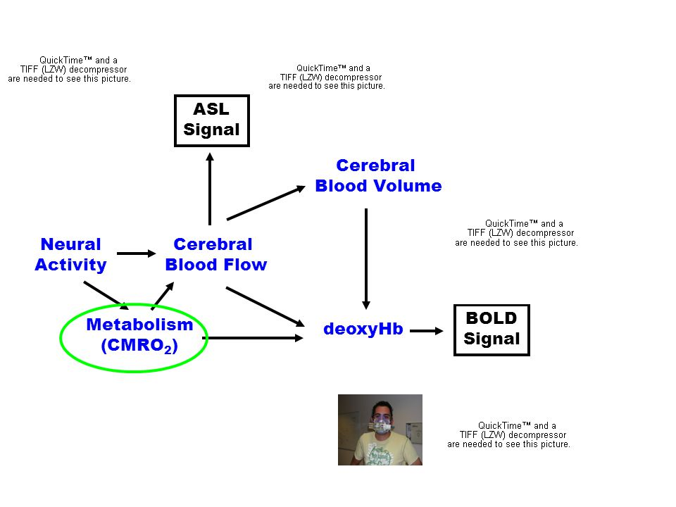 ASL Signal. Cerebral. Blood Volume. deoxyHb. Neural. Activity. Cerebral. Blood Flow. Metabolism.