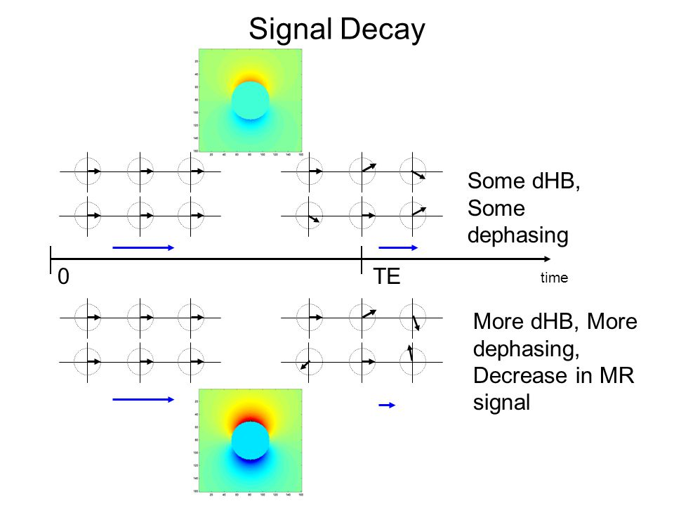 Signal Decay Some dHB, Some dephasing TE