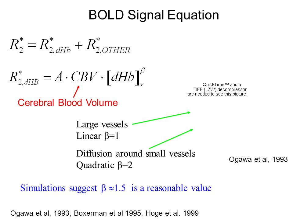 BOLD Signal Equation Cerebral Blood Volume Large vessels Linear =1