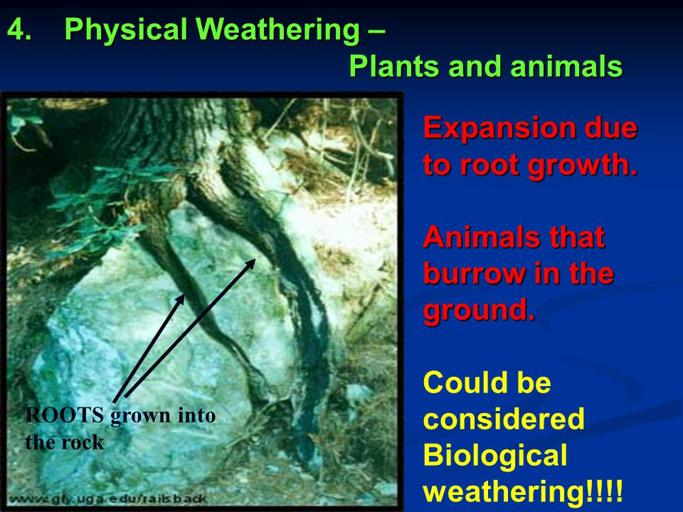 Physical Weathering – Plants and animals