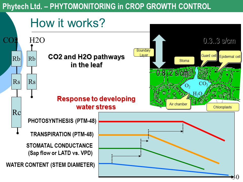 CO2 and H2O pathways in the leaf Response to developing water stress