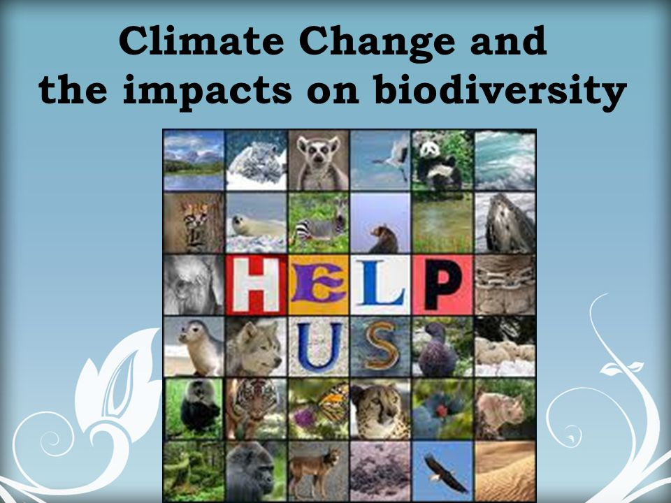 the impacts on biodiversity
