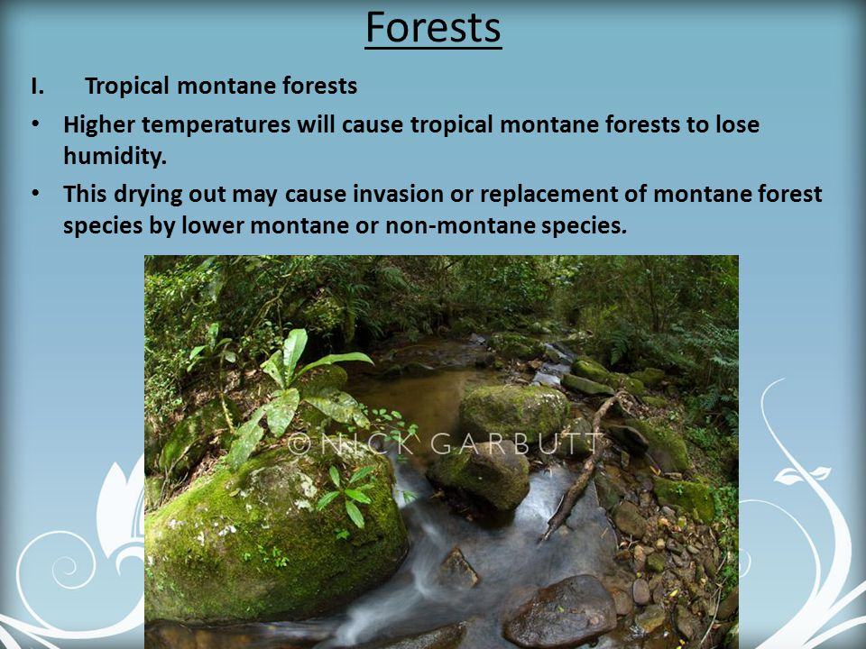 Forests Tropical montane forests