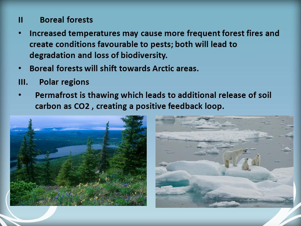 II Boreal forests