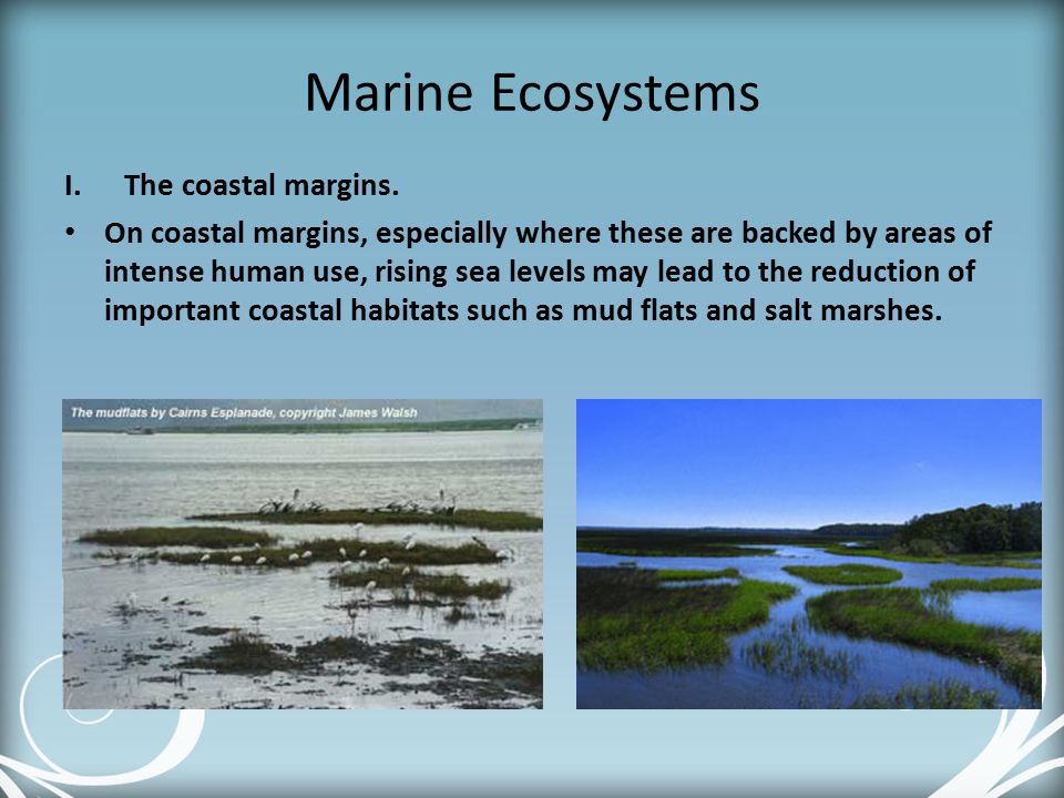Marine Ecosystems The coastal margins.
