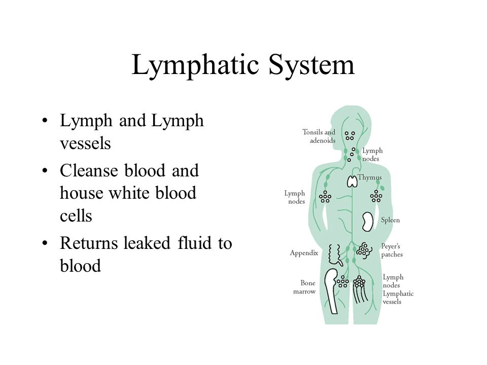 Lymphatic System Lymph and Lymph vessels