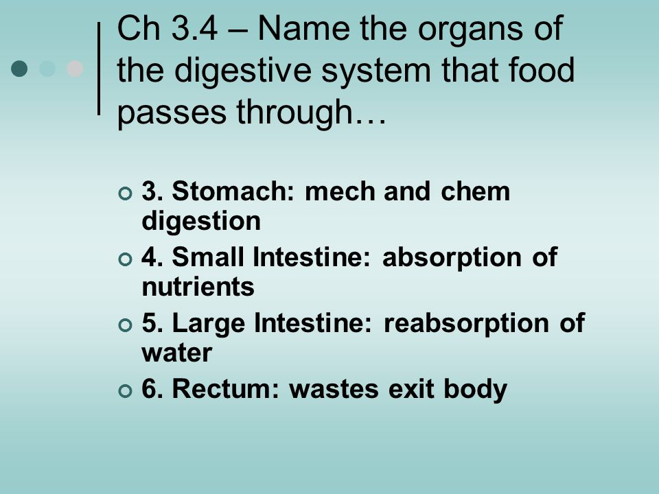Ch 3.4 – Name the organs of the digestive system that food passes through…