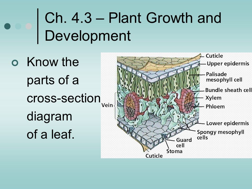 Ch. 4.3 – Plant Growth and Development