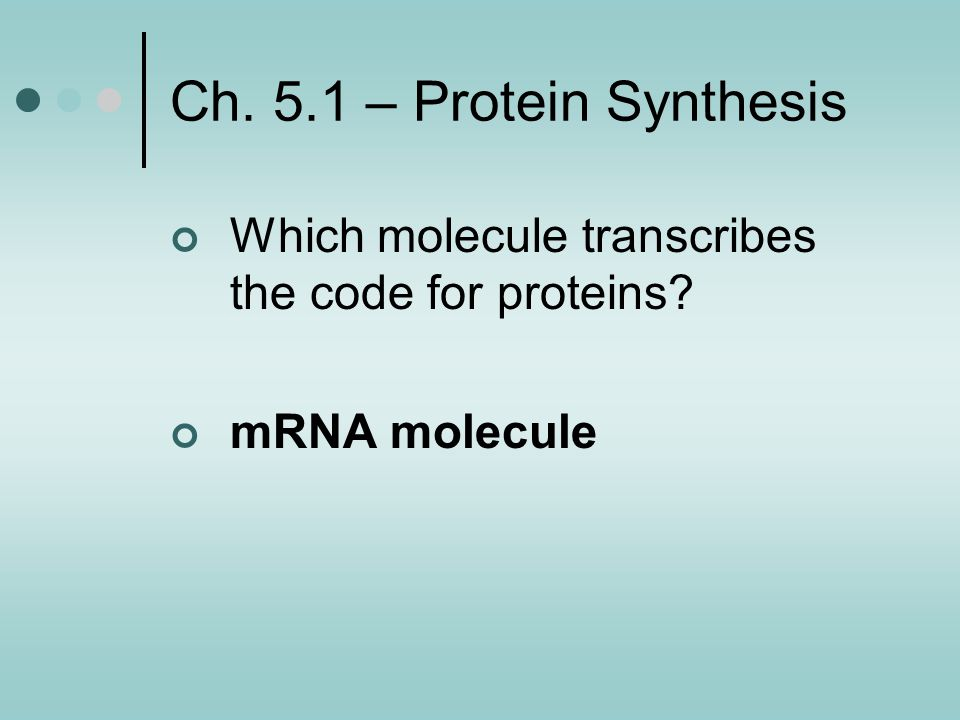 Ch. 5.1 – Protein Synthesis Which molecule transcribes the code for proteins mRNA molecule