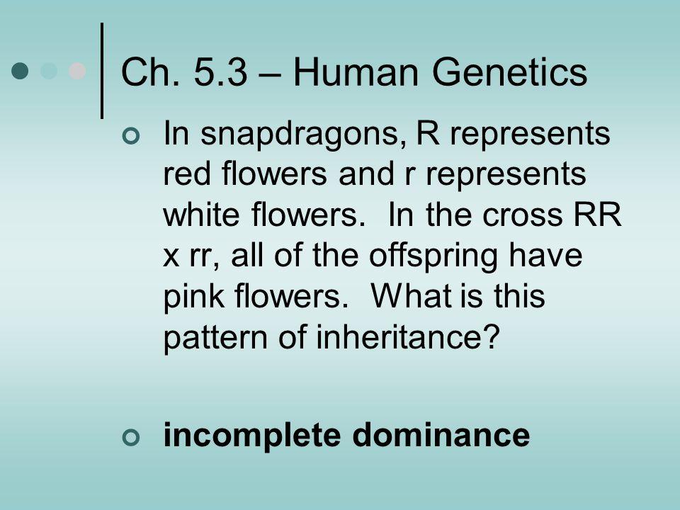 Ch. 5.3 – Human Genetics