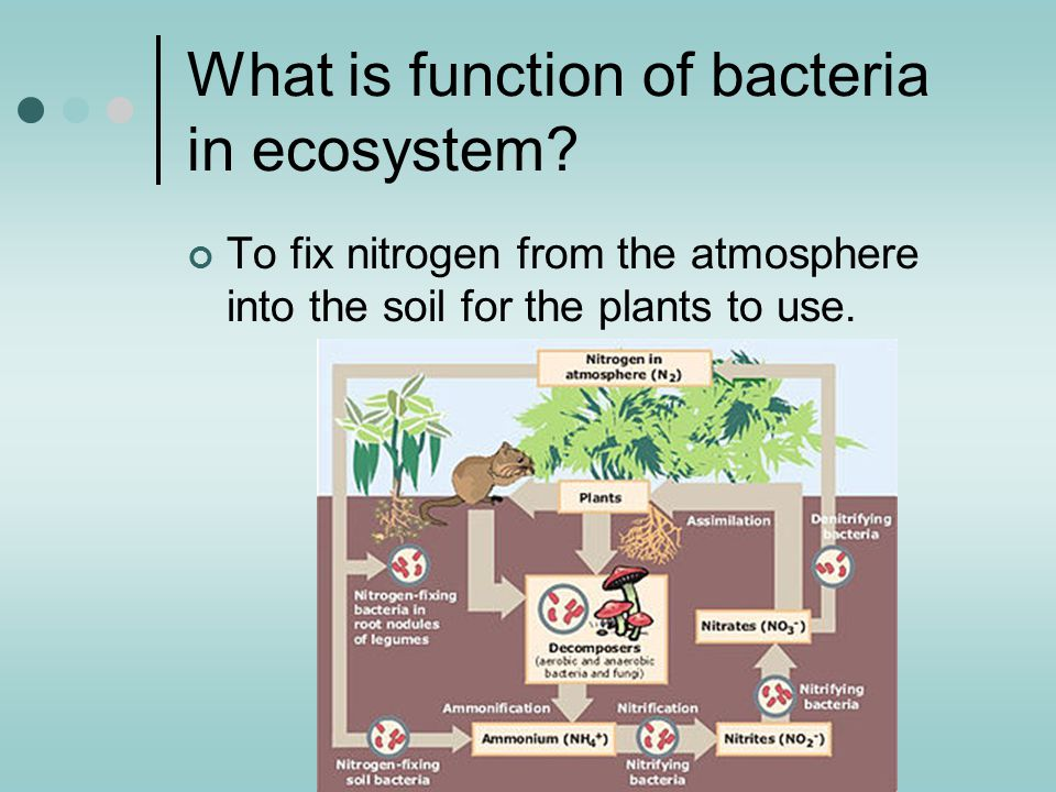 What is function of bacteria in ecosystem