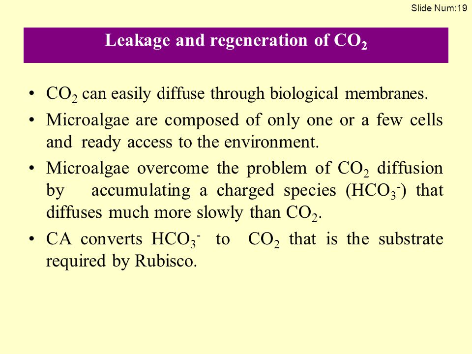 Leakage and regeneration of CO2