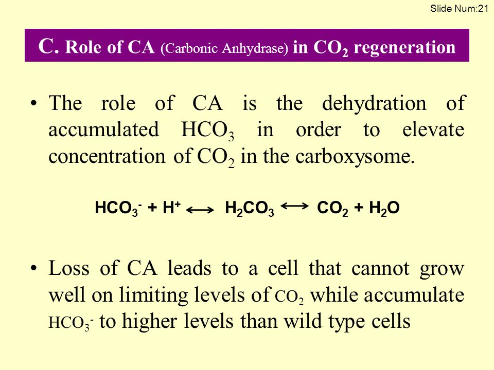 C. Role of CA (Carbonic Anhydrase) in CO2 regeneration