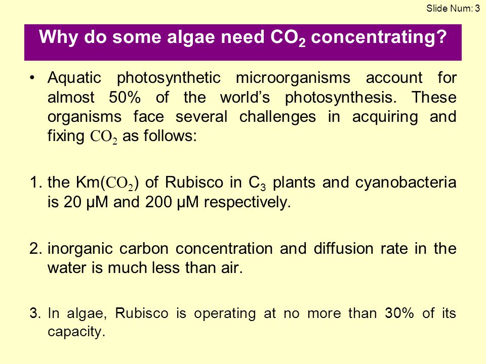 Why do some algae need CO2 concentrating