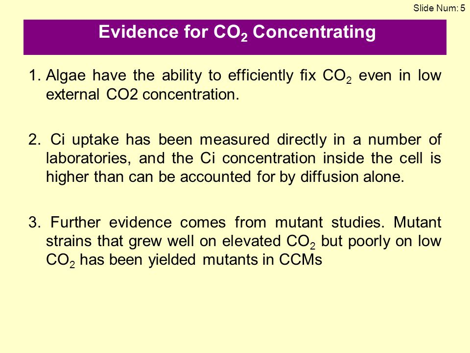 Evidence for CO2 Concentrating