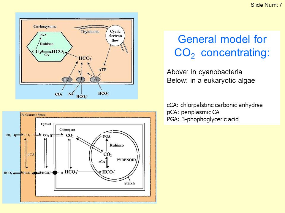 General model for CO2 concentrating: