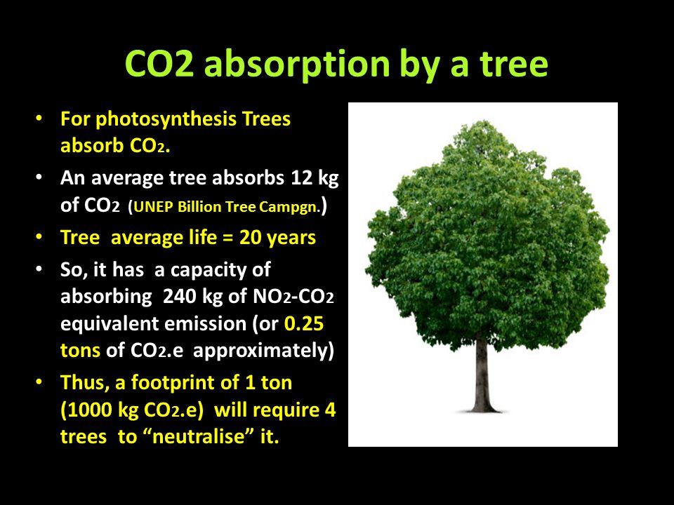 CO2 absorption by a tree For photosynthesis Trees absorb CO2.