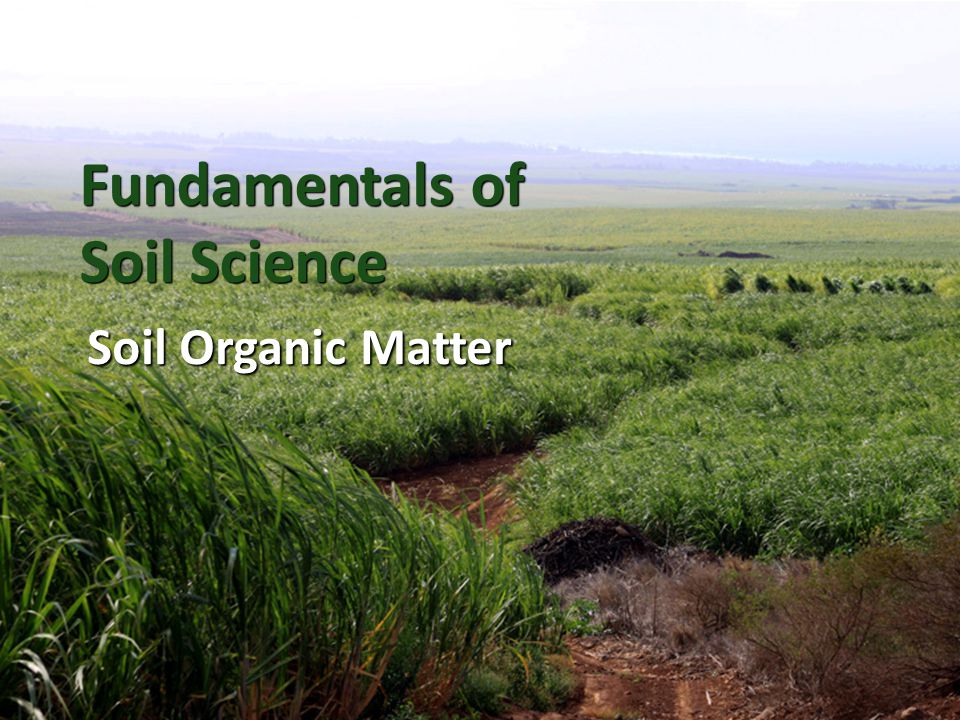 Fundamentals of soil science ppt video online download for Soil organic matter