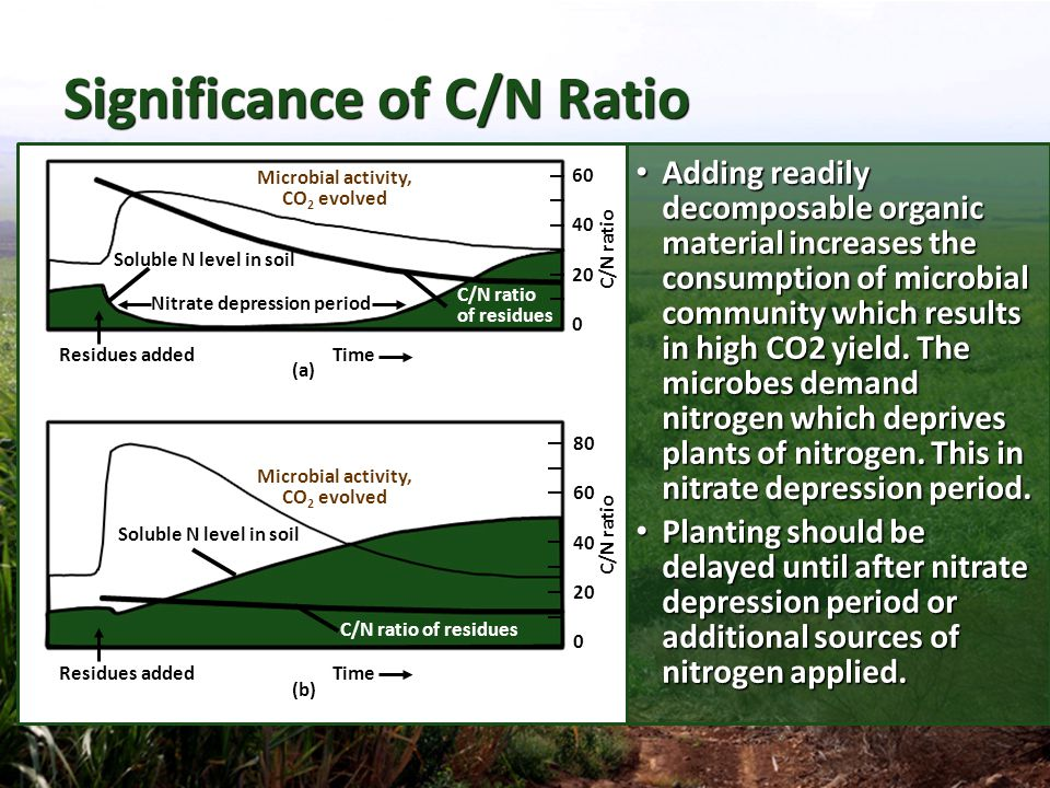 Significance of C/N Ratio