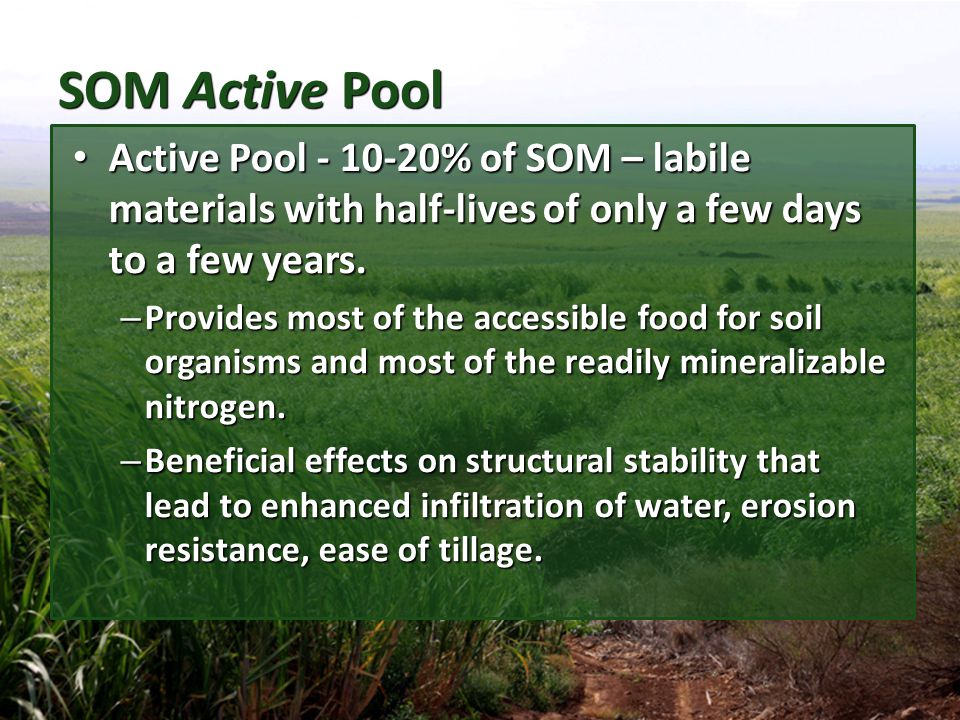 SOM Active Pool Active Pool - 10-20% of SOM – labile materials with half-lives of only a few days to a few years.