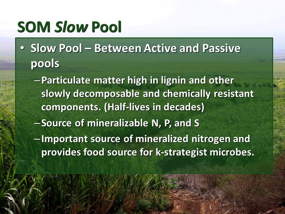 SOM Slow Pool Slow Pool – Between Active and Passive pools