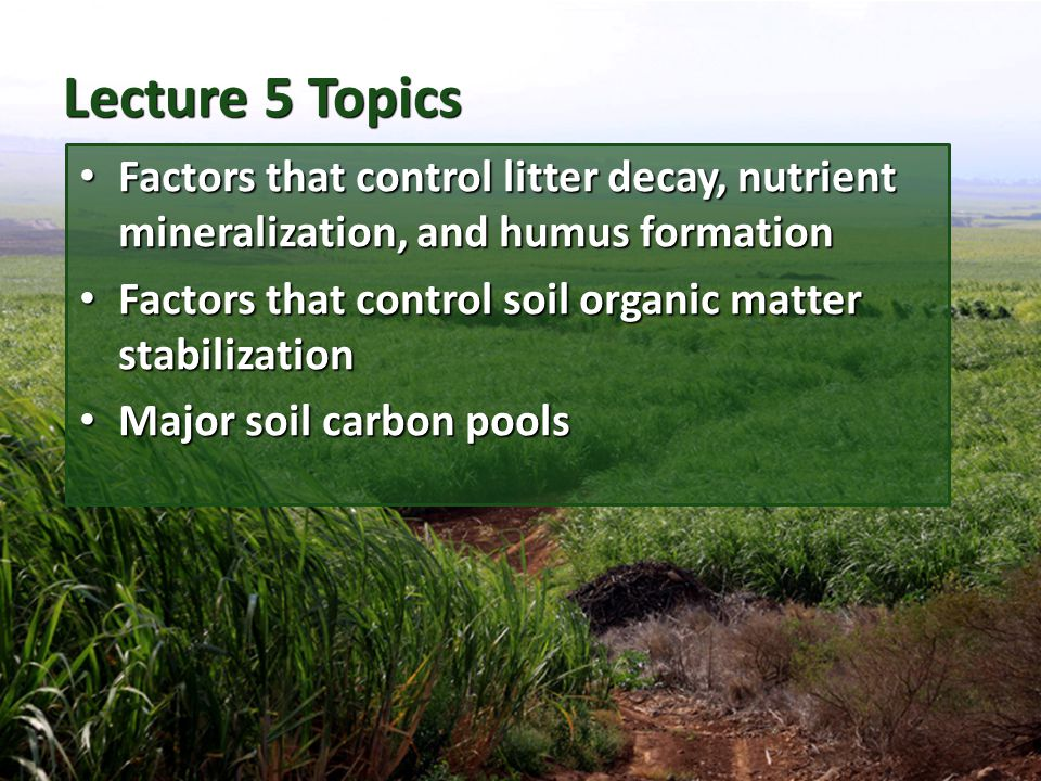 Lecture 5 Topics Factors that control litter decay, nutrient mineralization, and humus formation.