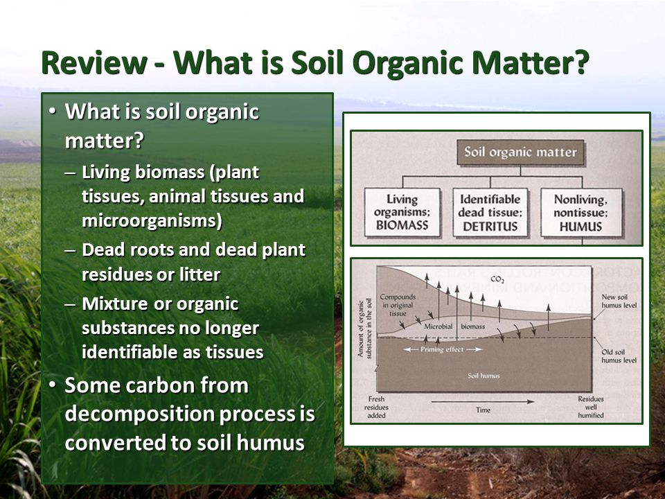 Review - What is Soil Organic Matter