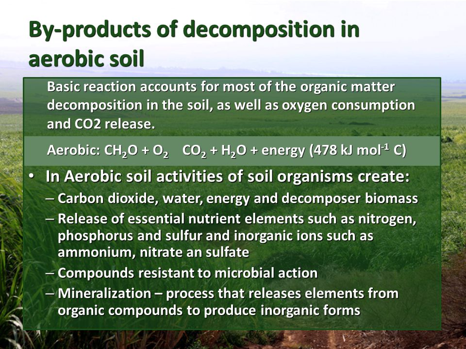 By-products of decomposition in aerobic soil