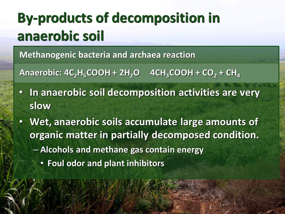 By-products of decomposition in anaerobic soil