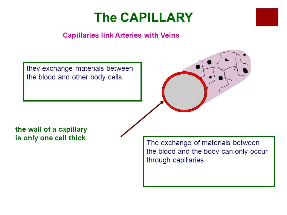 The CAPILLARY Capillaries link Arteries with Veins