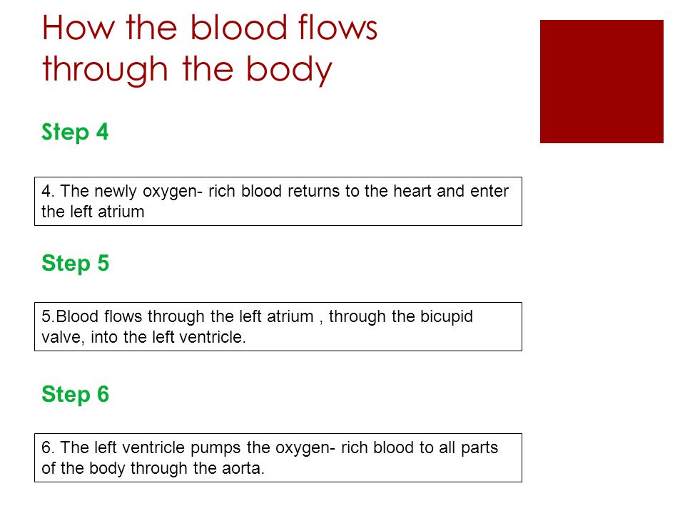 How the blood flows through the body