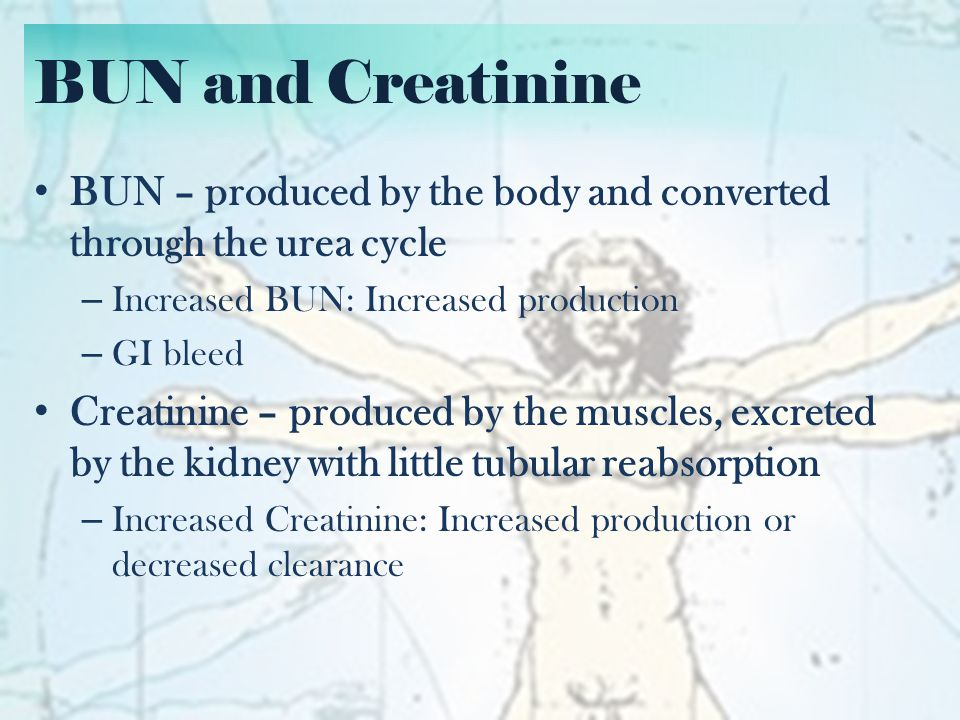 BUN and Creatinine BUN – produced by the body and converted through the urea cycle. Increased BUN: Increased production.